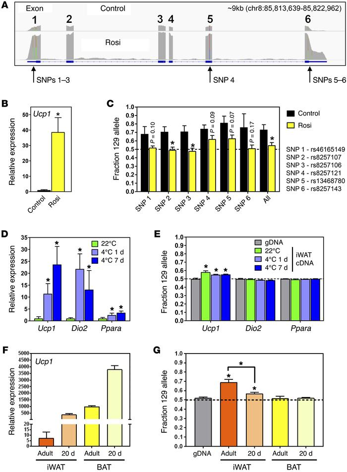Rosiglitazone-, cold-, and development-induced browning rescue the B6 ge...