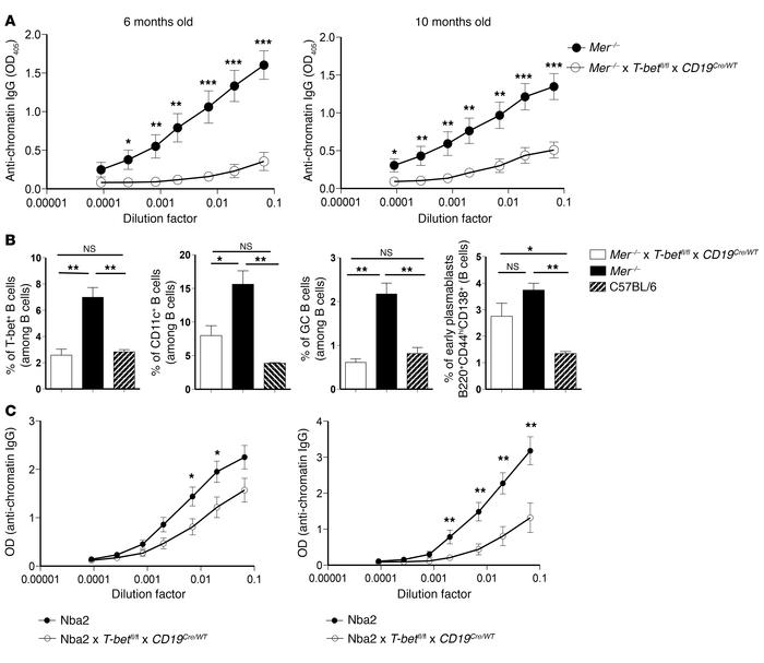 Mer–/– and Nba2 mice with B cell–specific T-bet deletion exhibit reduce...