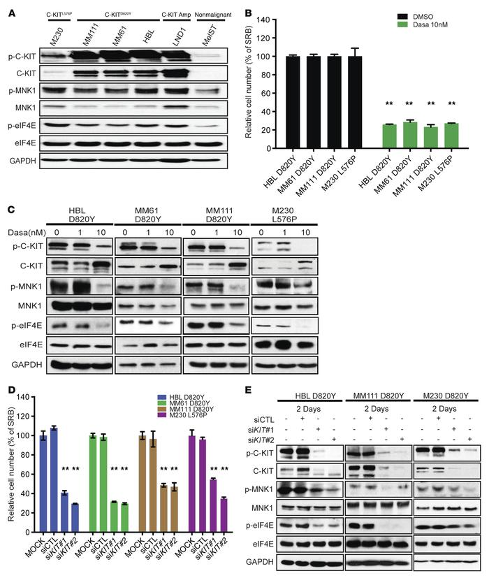 C-KIT inhibitor dasatinib suppresses cell proliferation and the activati...