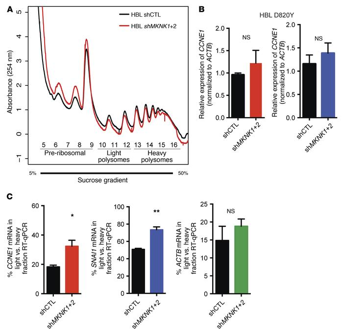 Inhibition of MNK1/2 impairs CCNE1 and SNAI1 mRNA translation in KIT-mut...
