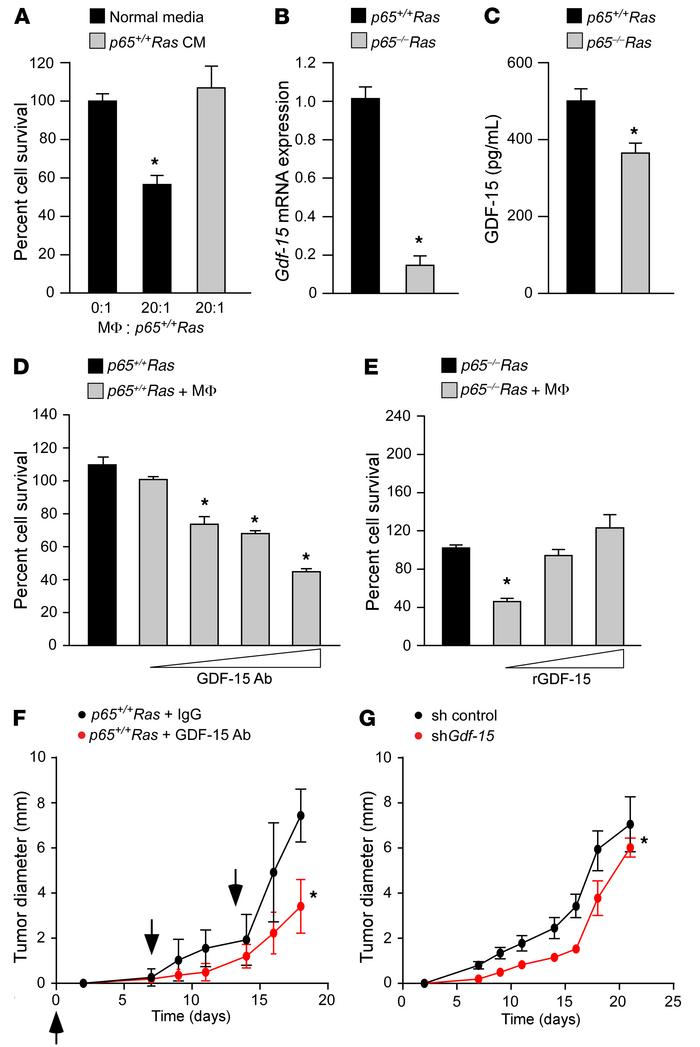GDF-15 protects transformed cells against macrophages and promotes tumor...