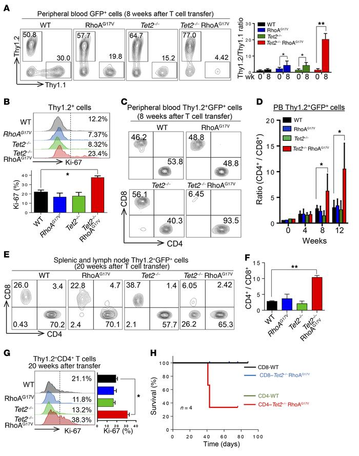 TET2 loss and RhoAG17V expression cause abnormal expansion of CD4+ T cel...