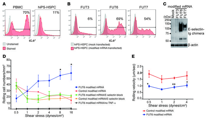 FUT6 modified mRNA–mediated glycoengineering enhances tethering and roll...