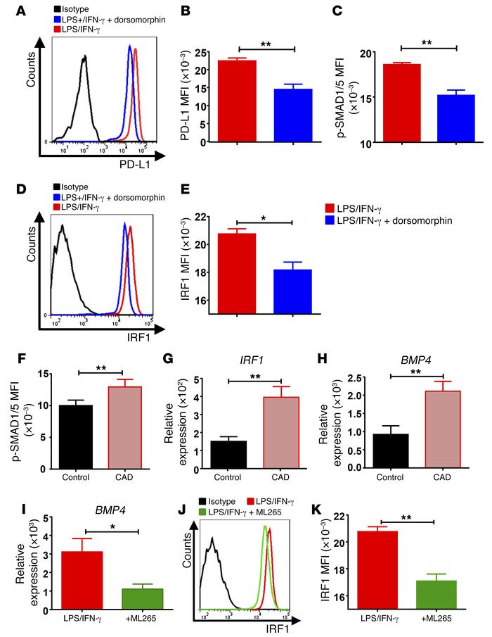 The BMP4/IRF1 axis drives PD-L1 expression in CAD macrophages. (A–E) Mac...