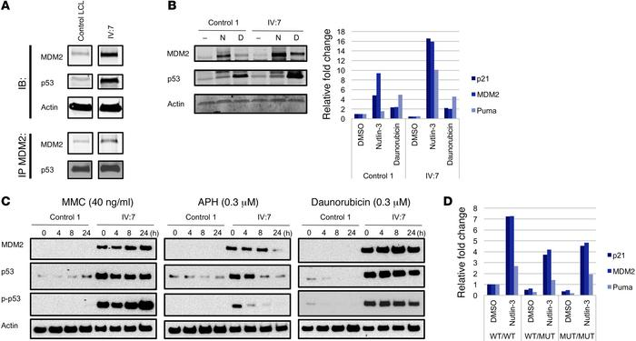 The antiterminating mutation results in abnormal p53 functional response...