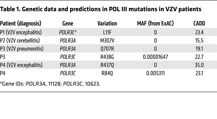 Genetic data and predictions in POL III mutations in VZV patients