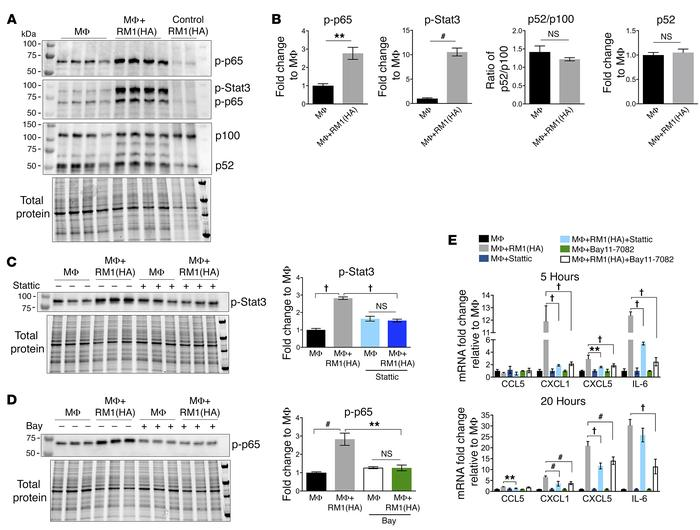 Efferocytosis-induced activation of Stat3 and NF-κB signaling mediates i...