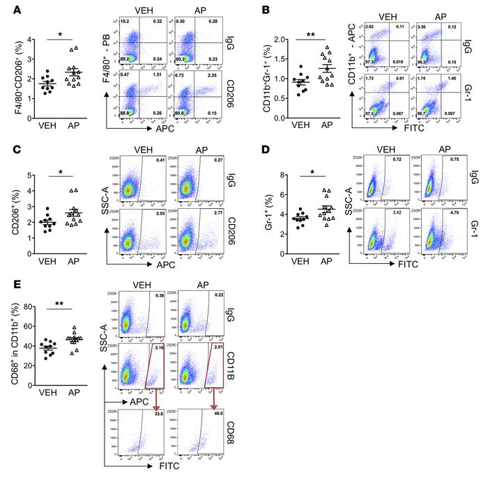 Increased tumor-accelerating myeloid inflammatory cells in AP-treated tu...