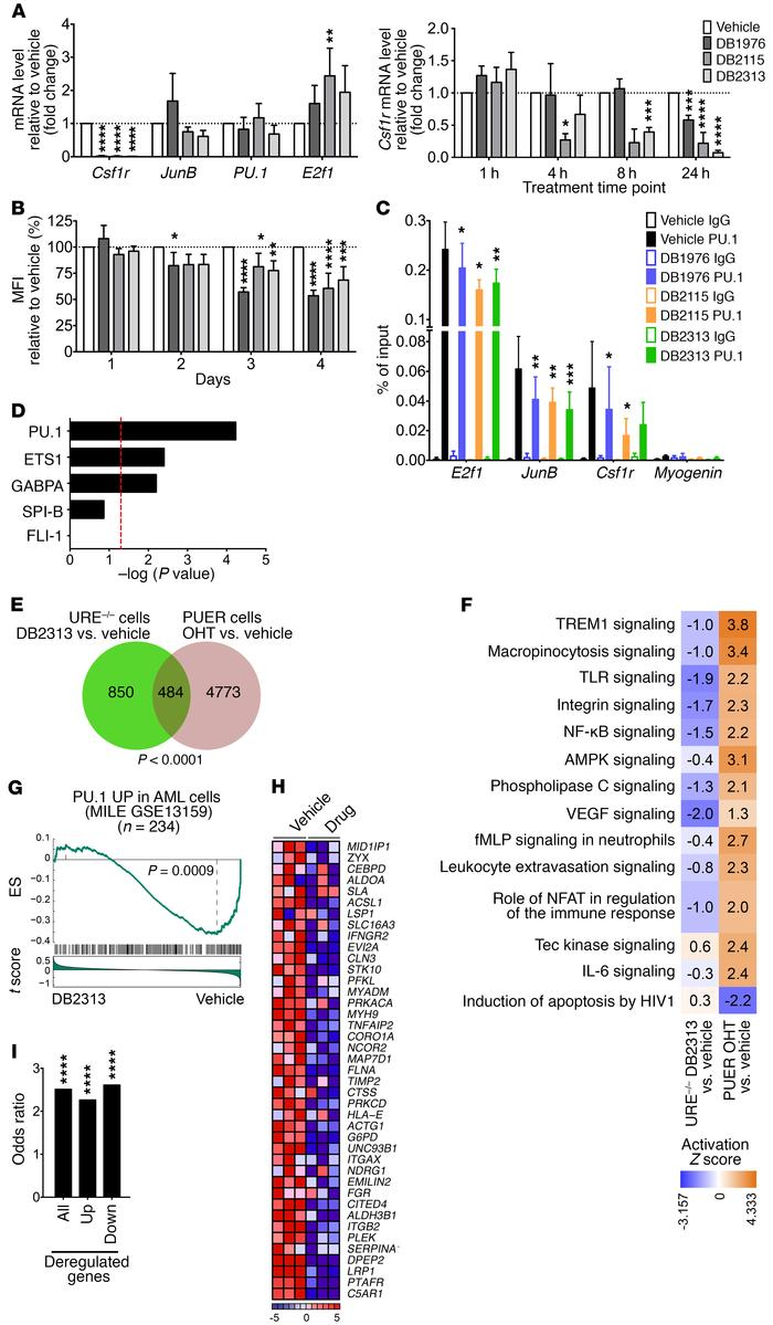 Inhibitors show on-target PU.1 inhibitory activity in AML cells. (A) qRT...