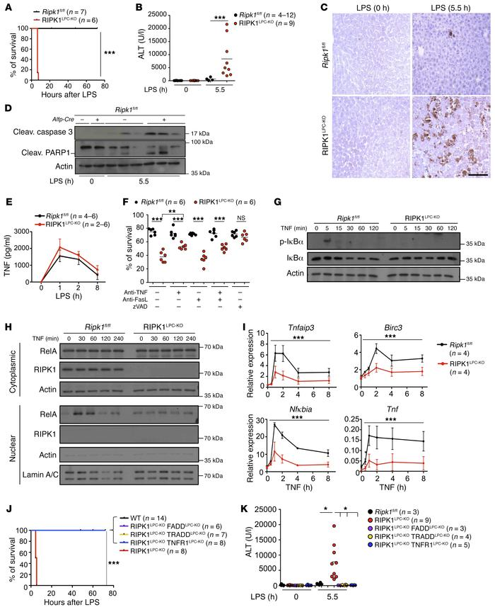 RIPK1 prevents LPS-induced liver injury by inhibiting TNF-mediated hepat...