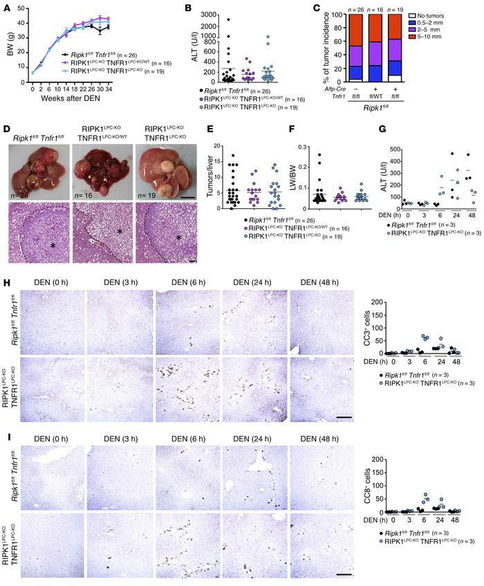 TNFR1 signaling inhibits DEN-induced liver tumorigenesis in RIPK1LPC-KO ...