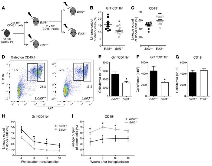 Del-1 promotes regeneration of myelopoiesis. (A) Experimental design use...