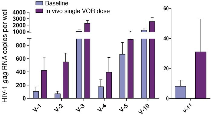 In vivo administration of a single 400-mg dose of VOR led to a significa...