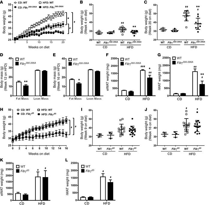 Fibγ390–396A, but not FibγΔ5, mice are protected from the development o...
