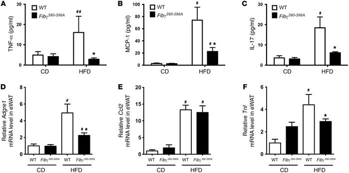 Fibγ390–396A mice develop significantly diminished HFD-induced systemic...