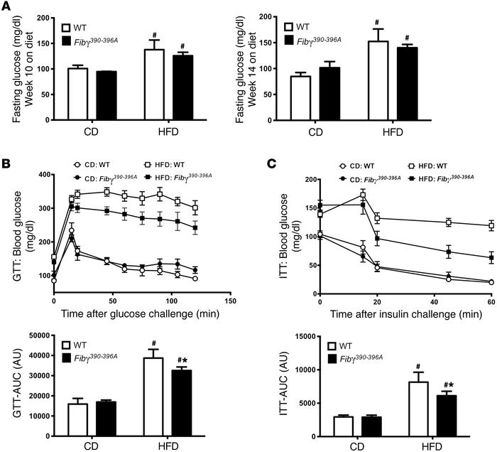 Fibγ390–396A mice are protected from HFD-induced glucose dysmetabolism ...