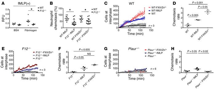 The FXII-uPAR axis promotes neutrophil adhesion and chemotaxis. (A) WT (...