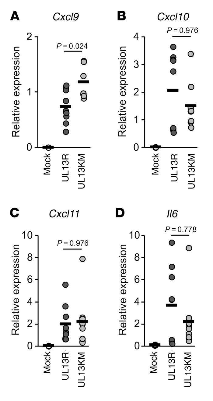 Effect of HSV-1 UL13 kinase activity on expression of cytokine mRNAs in ...