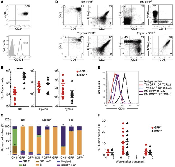 Constitutive NOTCH1 activation boosts BM engraftment of human HSPCs and ...