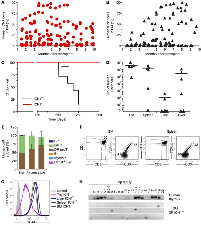 Constitutive Notch1 signaling promotes an aggressive human T-ALL. (A and...