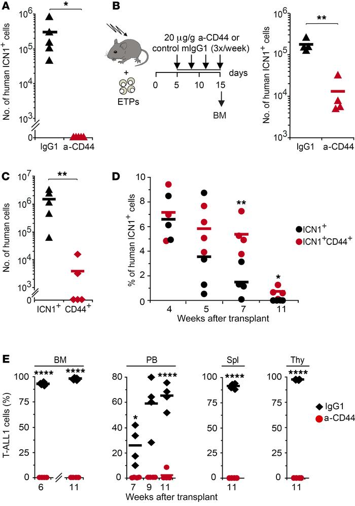 CD44 is essential for BM engraftment of ICN1-induced human preleukemic T...