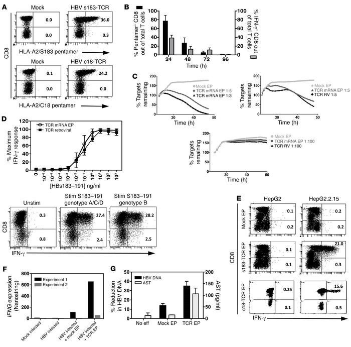 Lytic and antiviral function of mRNA HBV–specific TCR–electroporated T c...