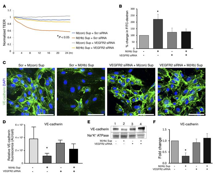 M(Hb) macrophages promote vascular permeability via VEGF-A/VEGFR2 signal...