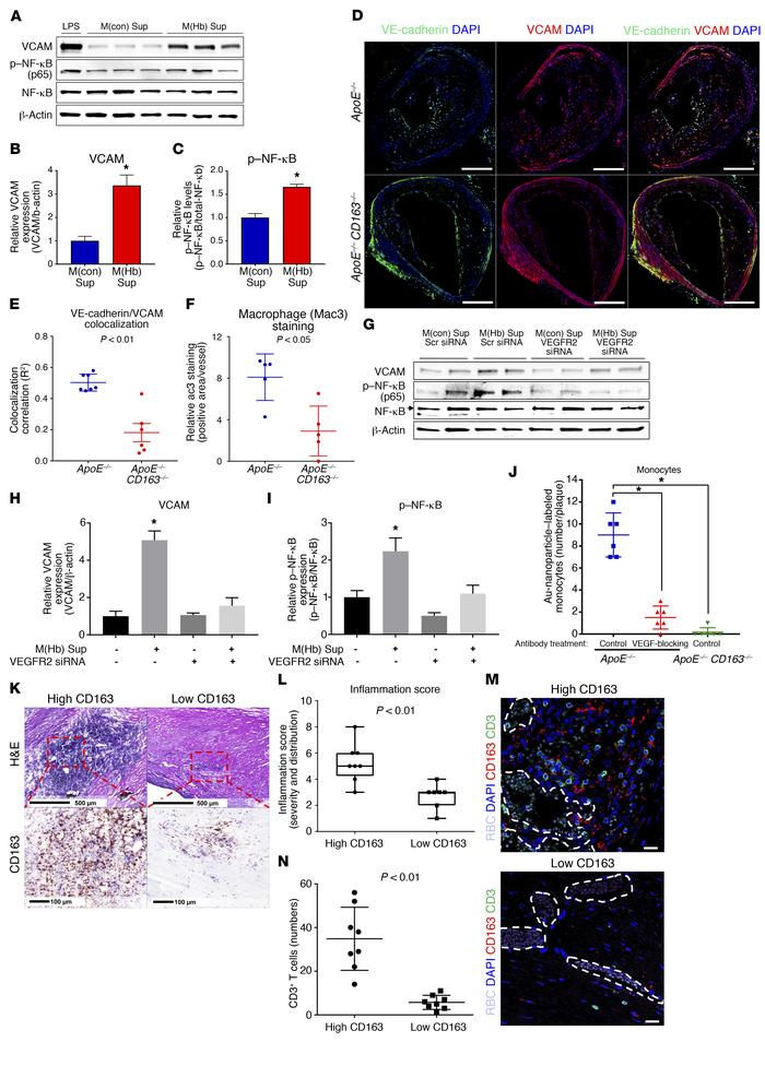 CD163+ macrophages increase intraplaque endothelial VCAM and leukocyte r...