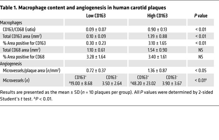 Macrophage content and angiogenesis in human carotid plaques