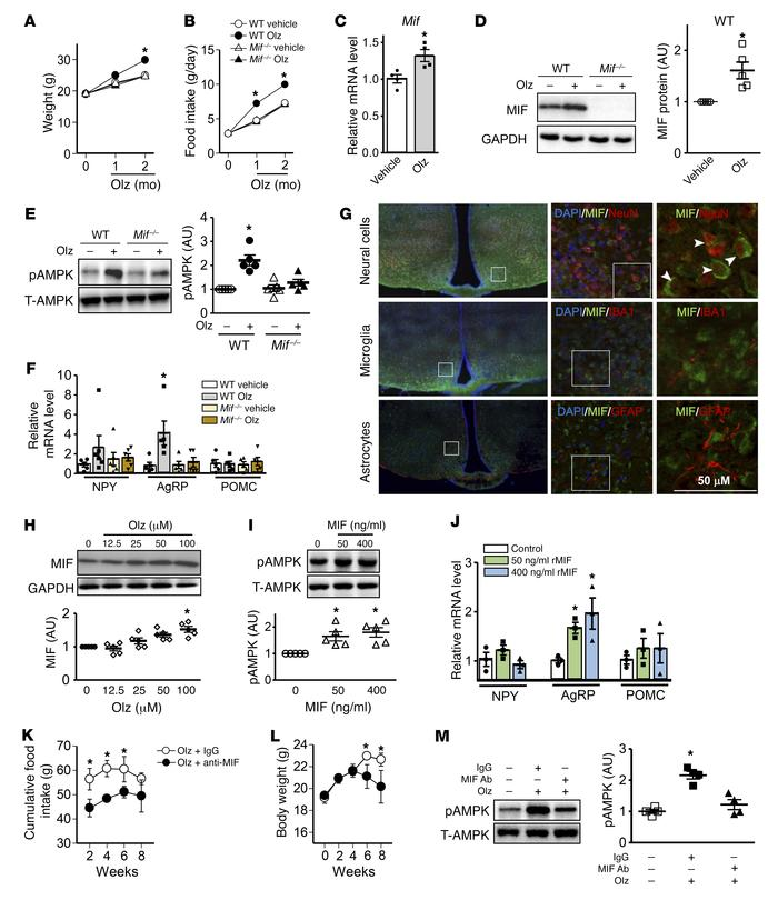 MIF modulates food intake and obesity by activating AMPK in the hypothal...