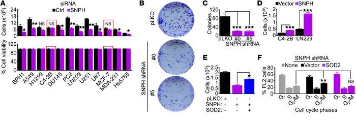 Mitochondrial SNPH supports tumor cell proliferation. (A) The indicated ...