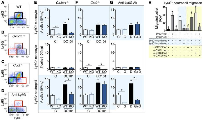 Ly6Clo monocyte infiltration during anti-VEGFR2 treatment recruits neutr...