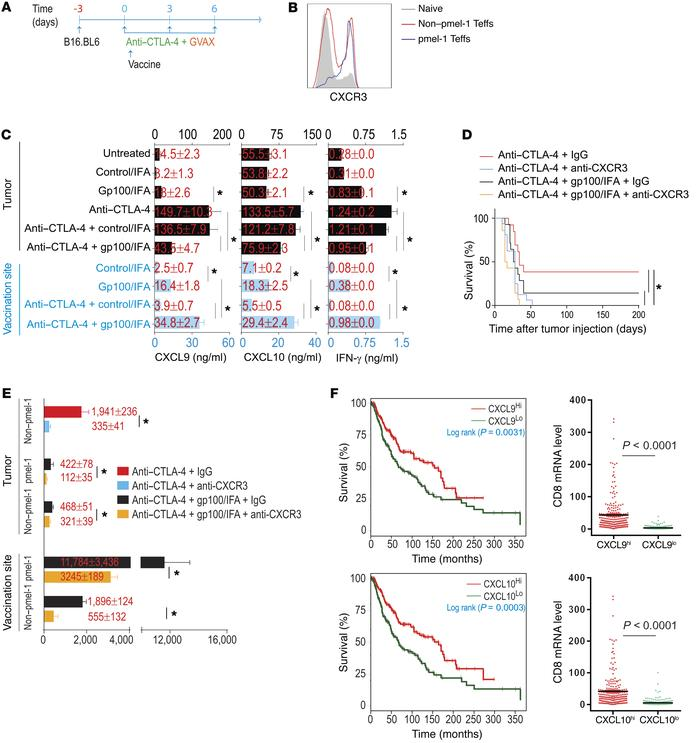 CXCR3 is required for CD8+ Teff localization to tumor. (A) Experimental ...