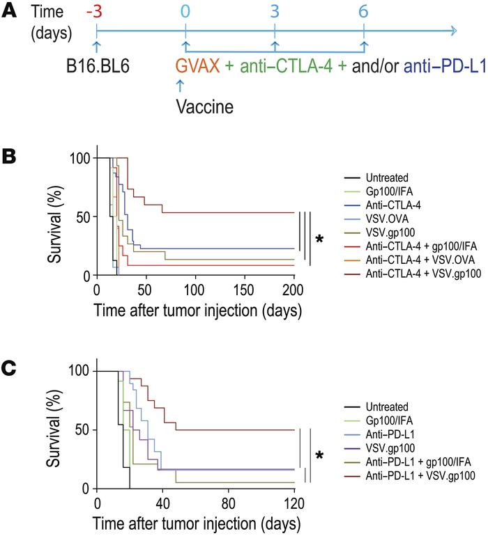 Nonpersistent viral vaccine synergizes with therapeutic CTLA-4 and PD-L1...