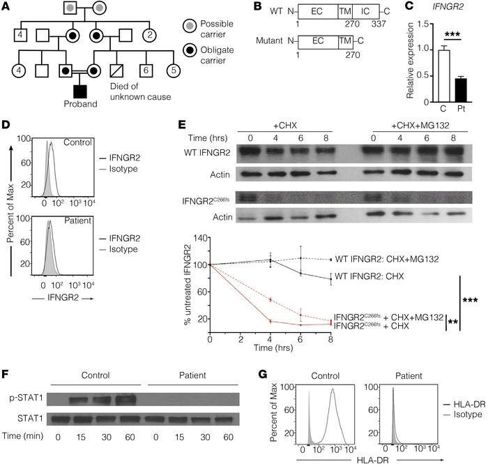 IFNGR2C266fs has minimal protein expression and abrogates downstream sig...