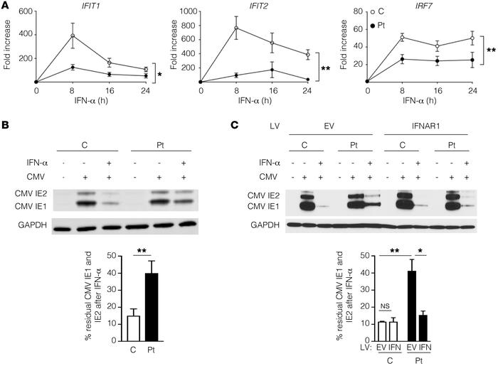IFNAR1*557next*46 demonstrates impaired induction of ISGs and inhibition...