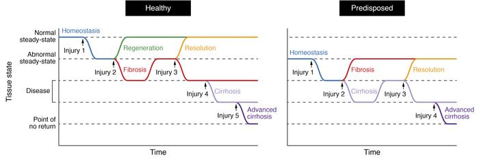 Periodicity of damage alters the ability of the tissue to return to home...