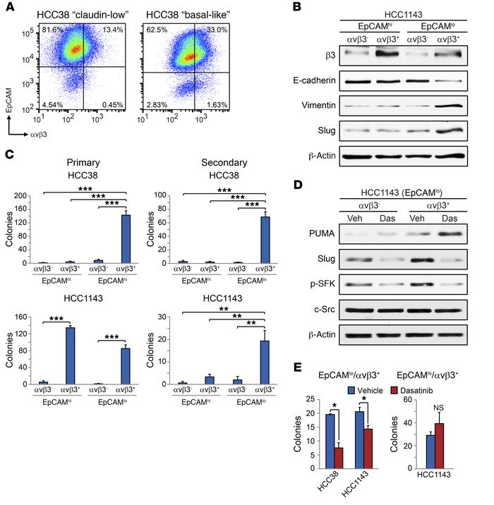 Src inhibition upregulates PUMA and depletes stem-like cells in distinct...