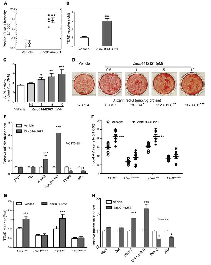 Effects of Zinc01442821 on polycystin/TAZ signaling, osteoblastic differ...