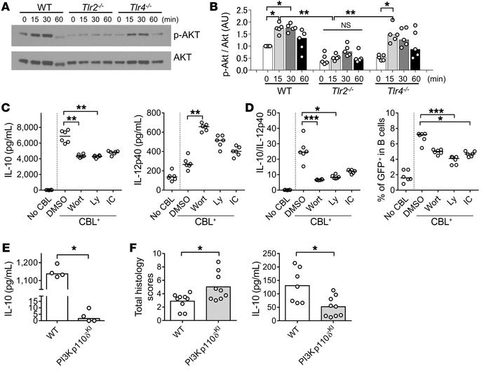 The PI3K/AKT pathway is involved in TLR2-dependent IL-10 production by C...