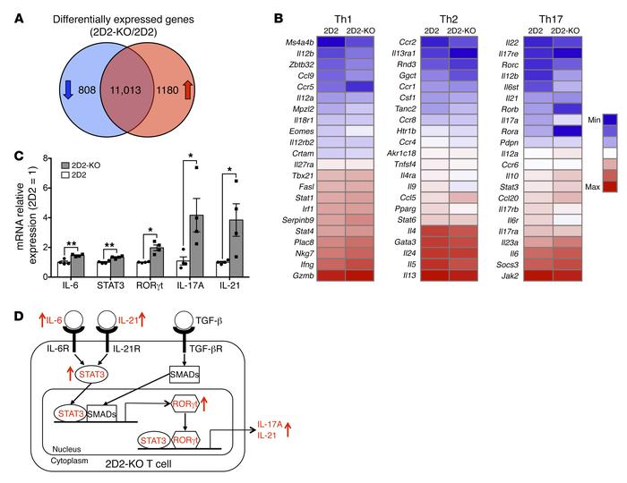 Jci Mir 146a Modulates Autoreactive Th17 Cell Differentiation And