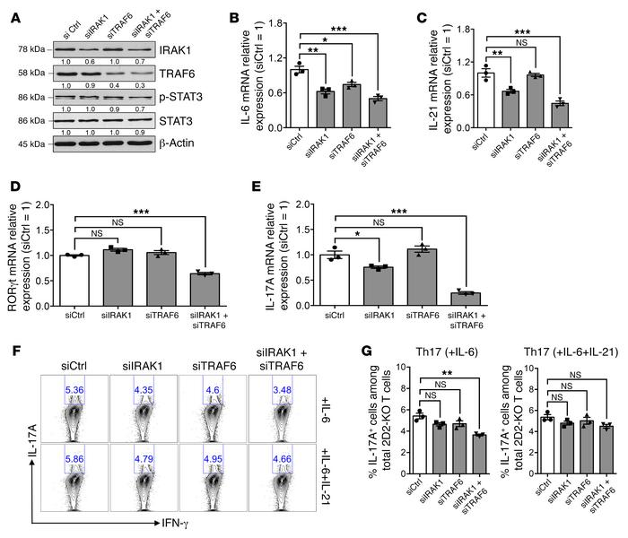 TRAF6 and IRAK1 are possible mediators of miR-146a–regulated Th17 differ...