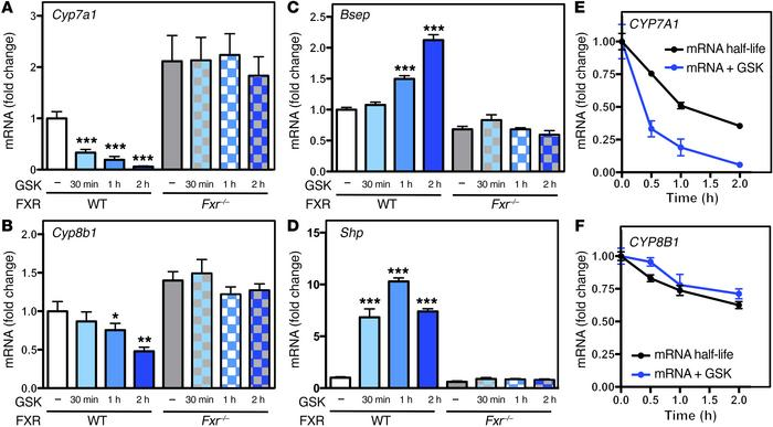 FXR activation leads to rapid changes in gene expression. (A–D) Hepatic ...