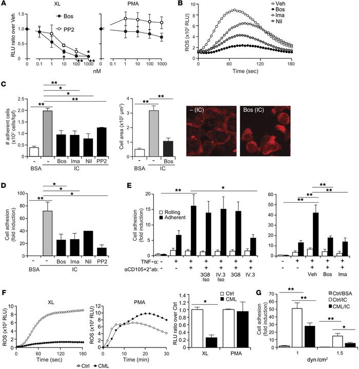 Bosutinib inhibits FcγRIIA functions in human neutrophils. (A) ROS after...
