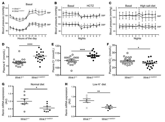 Normal BP on both normal and high-salt diet in Wnk1+/delE631 mice. (A–C)...