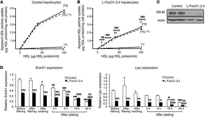 Uptake of 125I-TC–/[3H]CEt-WT-HDL by hepatocytes isolated from chow-fed ...