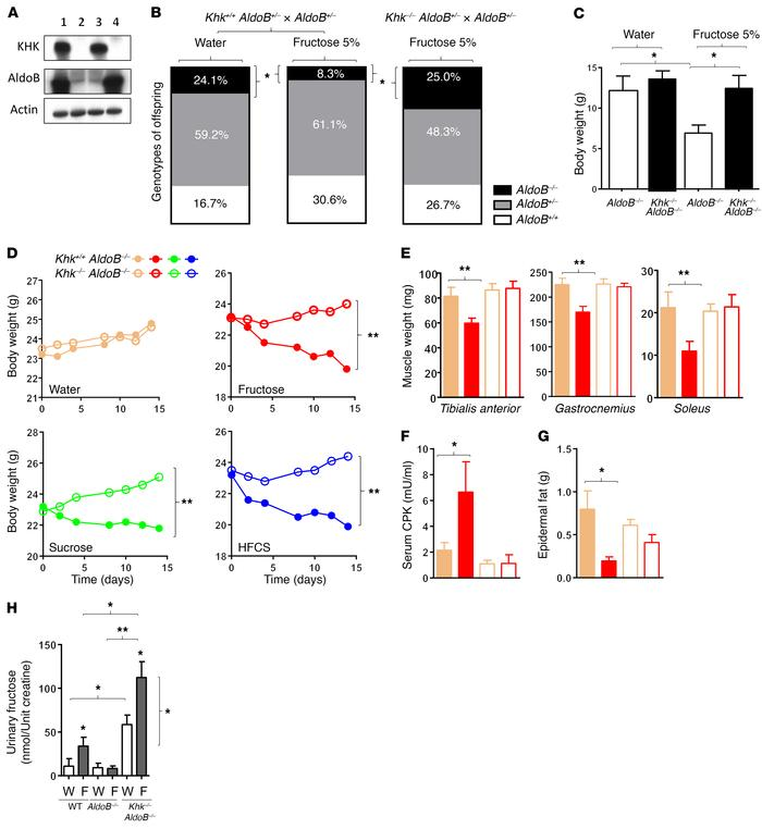 Metabolic responses associated with Khk deletion in AldoB-KO mice. (A) R...