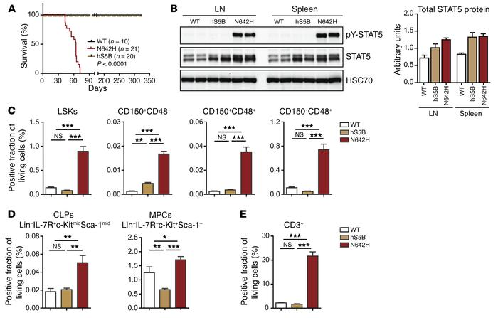 Moderate Vav1-driven expression of hSTAT5BN642H in mice leads to HSC exp...