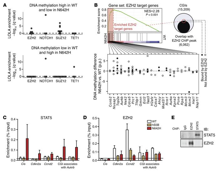 hSTAT5BN642H-driven DNA methylation changes accompanied by enhanced DNA-...