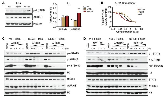 hSTAT5BN642H-driven diseased T cells are sensitive to Aurora kinase B in...